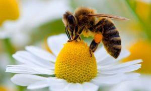 Bees, Bandicoots, and Bayer