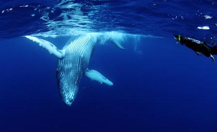 whalescape